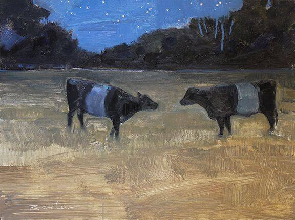 Two Belted Galloways